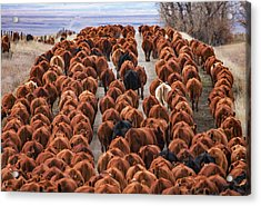 River Of Reds Acrylic Print by Todd Klassy