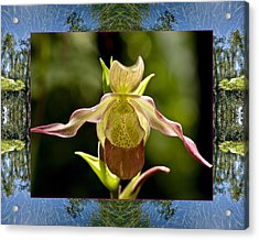 Acrylic Print featuring the photograph River Orchid by Bell And Todd