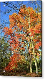 Acrylic Print featuring the photograph River Road Maples by Ray Mathis