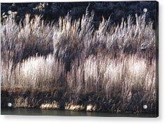 River Sage Acrylic Print by Lynard Stroud