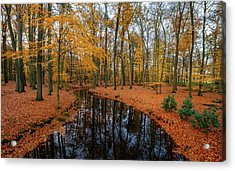 River Through Autumn Acrylic Print
