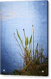 Riverbank Beauty Acrylic Print by Carolyn Marshall