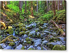 Riverbed Full Of Mossy Stones With Small Cascade Acrylic Print