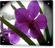 Acrylic Print featuring the photograph Riverfront Gallery Orchid by Randy Rosenberger