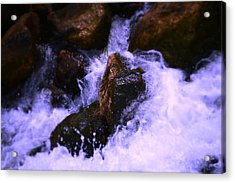 River's Dream Acrylic Print by Nature Macabre Photography
