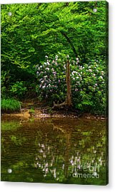 Riverside Rhododendron Acrylic Print