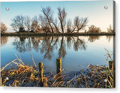 Acrylic Print featuring the photograph Riverside Trees by James Billings
