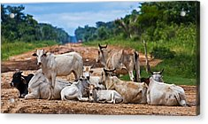 Acrylic Print featuring the photograph Road Block by Ron Dubin