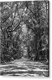 Road To Angel Oak Grayscale Acrylic Print