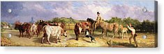 Road To Gloucester Fair Acrylic Print by Briton Riviere