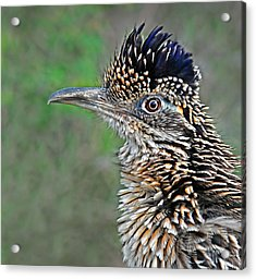 Roadrunner Portrait Acrylic Print by Dave Mills