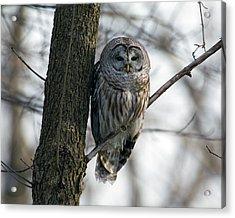 Roadside Barred Owl Acrylic Print