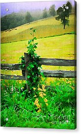 Roadside Beauty Acrylic Print by Darren Fisher