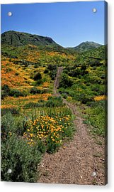 Acrylic Print featuring the photograph Roadside Flowers by Cliff Wassmann