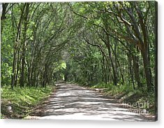Acrylic Print featuring the photograph Roadway To Mitchellville Beach by Carol  Bradley