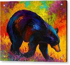 Roaming - Black Bear Acrylic Print