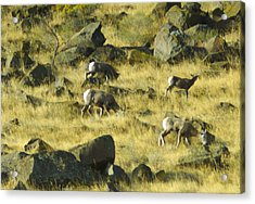 Acrylic Print featuring the photograph Roaming Free by Dale Stillman