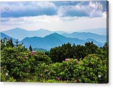 Roan Mountain Rhodos Acrylic Print by Dale R Carlson