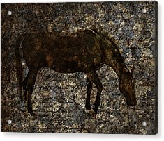 Roan Stallion Acrylic Print