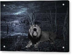 Roar Of The Asiatic Lion  Acrylic Print