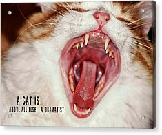 Roar Quote Acrylic Print by JAMART Photography