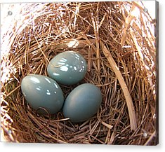 Acrylic Print featuring the photograph Robin Eggs by Angie Rea