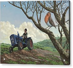 Robin In Field Looking At Farmer Acrylic Print by Martin Davey