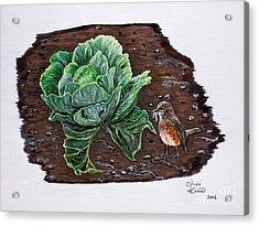 Robin In The Gardin Acrylic Print by Judy Kirouac