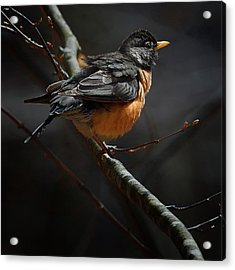 Robin In The Light Square Acrylic Print
