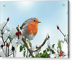 Robin In The Snow Acrylic Print