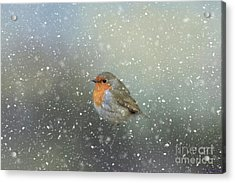 Acrylic Print featuring the photograph Robin In Winter by Eva Lechner