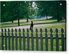 Robin On A Fence Acrylic Print by Lone Dakota Photography