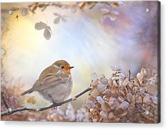 Robin On Dreams Acrylic Print by Teuni