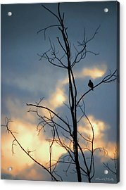 Acrylic Print featuring the photograph Robin Watching Sunset After The Storm by Sandi OReilly