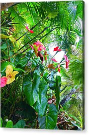 Robins Garden With Anthuriums And Ferns Acrylic Print