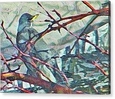 Robins Impression Of Spring Acrylic Print
