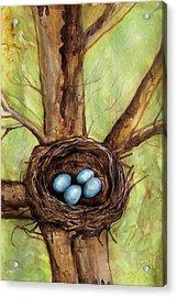 Robin's Nest Acrylic Print by Carrie Jackson