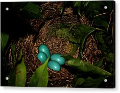 Robins Nest Acrylic Print