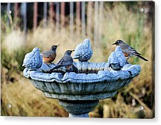 Robins On Birdbath Acrylic Print by Barbara Rich