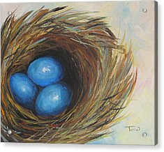 Robin's Three Eggs Acrylic Print by Torrie Smiley