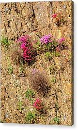 Rock Cutting 1 Acrylic Print by Werner Padarin