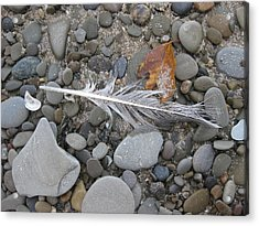 Rock Feather Shell Leaf Acrylic Print