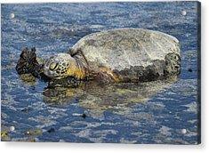 Acrylic Print featuring the photograph Rock Pillow by Pamela Walton
