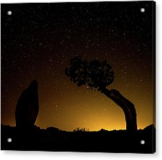 Acrylic Print featuring the photograph Rock, Tree, Friends by T Brian Jones