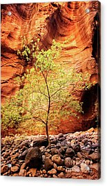 Acrylic Print featuring the photograph Rock Tree by Scott Kemper