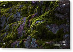 Rock With Green  Acrylic Print by Barbara Schultheis