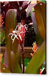 Rockefeller Fleur In Nyc Acrylic Print