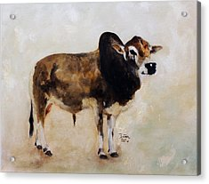 Rocket The Master Champion Herd Sire Miniature Zebu Acrylic Print