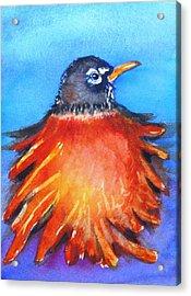 Rockin Robin Acrylic Print by Patricia Piffath
