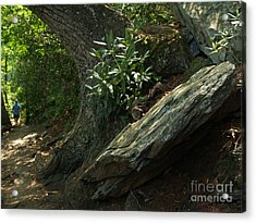 Rocks And Rhododendron At Chimney Rock Acrylic Print by Anna Lisa Yoder